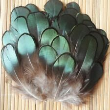 Smart 50pcs Green Amherst Pheasant Feather for Crafts DIY Decorative Accessories