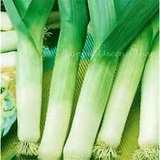 LEEK - TORNADO WINTER GIANT - Allium Porrum - 500  SEEDS vegetable