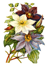 Furniture WATERSLIDE Decal Transfer Image vintage - Bunch  Flowers Floral /201
