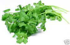 Coriander Seed, Herb, 10g,  Approx 1000seeds Salad Leaf, Kitchen Herb
