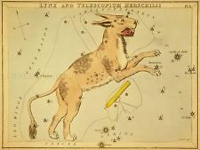 PAINTINGS DRAWING STAR MAP LYNX TELESCOPE CONSTELLATION ART POSTER PRINT LV3136