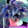 Coleus Seeds 100 Foliage Plants Bonsai Color Arc Dragon Beautiful Flower Semente