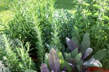 Herb seeds, 20 different varieties, choose yours
