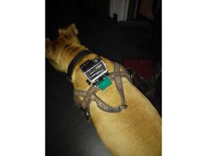 Go Pro Dog Collar Mount Adapter GoPro Hero 3 3+ 4 5 6 HD Camera Accessories Fun
