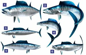 Wahoo Fish Beautiful Decal for Your Boat, Vehicle, Etc. Many Sizes and Styles