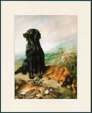 FLAT COATED RETRIEVER AND GOLDEN RETRIEVER DOG PRINT MOUNTED READY TO FRAME