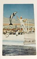 The High-Jumping Porpoise Marineland of the Pacific Calif. Vintage Postcard