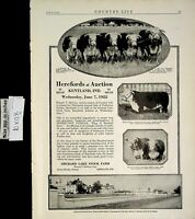 1922 Herefords Auction Kentland IN Orchard Lake Stock Farm Vintage Print Ad 6352