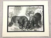 1875 Antique Print Animals Indian Rhino Rhinoceros Vadodara India