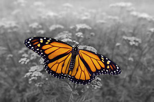 BLACK AND WHITE YELLOW BUTTERFLY PRINT PICTURE  POSTER  ABSTRACT ART
