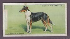 Smooth Collie Dog Canine Pet 1930s Ad Trade Card