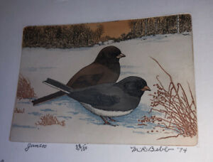 M R Bebb Juncos Art 88/150 1974 Bird Color Etching Print Picture NOS