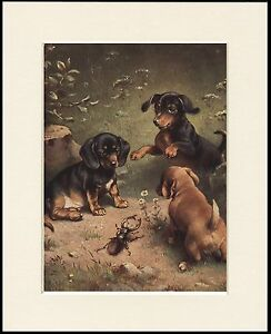 DACHSHUND PUPPIES AND STAG BEETLE LOVELY DOG PRINT MOUNTED READY TO FRAME