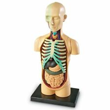 Human Body Model Science Anatomy Medical Teaching Professional Anatomical Facts