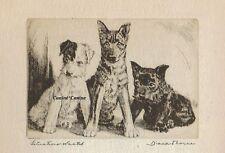 Scottish Terrier,German Shepherd, Fox Terrier Vintage Dog Print Diana Thorne 36