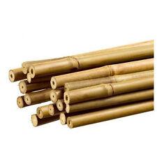 50x Tutores / Cañas de bambú natural para sujetar plantas 6/8mm (60cm)