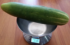 Cucumber Asian Green Monster - This Cucumber Variety Will Grow Up to 1.5 KG!!!