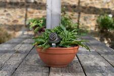 More details for feeder friends animal figure plant drip feeder handmade garden ornament figurine