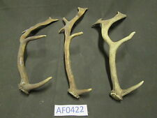 3 Fallow Deer Sheds Antlers Horn Knife Cane Craft Wildlife Hunting Decor Af0422