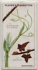Ivy And Everlasting Pea Tendrils 90+ Y/O Trade Ad Card