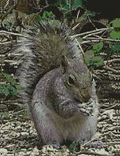 "Grey Squirrel Counted Cross Stitch Kit 10"" x 13.25"" 25.6cm x 33.6cm A2314"