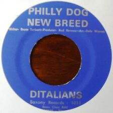 DITALIANS - Philly dog new breed / Egypt land - SAXONY - MOD