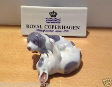Royal Copenhagen Figurine no.453 - Cucciolo Pointer che gioca - Pointer Puppies