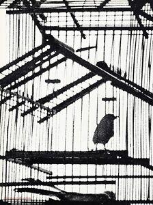 1967 Vintage Aviary Birds Cage By Sam Haskins Solo Pet Animal Photo Gravure Art