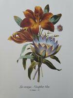 Redoute P59 Lis Orange Nenuphar bleu Vintage Floral Botanical Flower Print Art