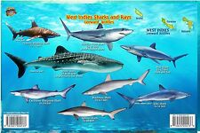 West Indies Sharks & Rays ABC Islands Laminated Fish Card by Franko Maps