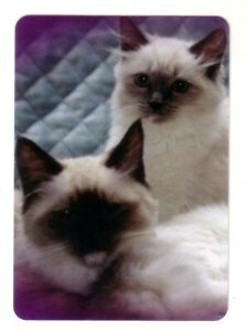 Beautiful Ragdoll Kittens  -- Modern Linen Wide Swap Playing Card