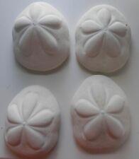 "White Sea Biscuit 4-5"" Sea Shells Beach Ocean Seashells Lot"