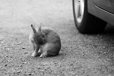 Digital  Picture/Photo/Wallpaper/Desktop Background/Beautiful Rabbit