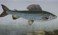 2001 Nouveau dictionnaire général des pêches Blanchère réimpression ouvrage XIXè