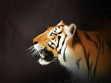 PRINT PAINT DRAWING NATURE ANIMAL BIG CAT TIGER PREDATOR STRIPES TEETH LFMP0223