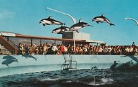 (Y)  Palos Verdes, CA - Marineland of the Pacific - High Flying Dolphins