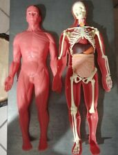 Esplorando Il Corpo Umano Prima Edizione 1989 MODELLINO