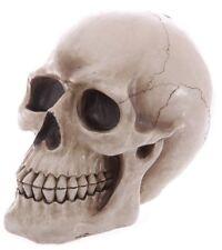 Spardose Totenkopf realistisches Design Skull Zombie Horror Deko gothic dark