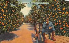 AMONG THE ORANGE GROVES IN FLORIDA BLACK AMERICANA POSTCARD 1941