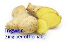 ***Ingweröl, naturrein (Zingiber officinalis), China, 10 ml  - Topp-Qualität!