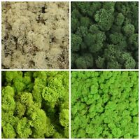 Reindeer Moss Preserved Norwegian Dried Craft Decoration Wreath Green & Natural