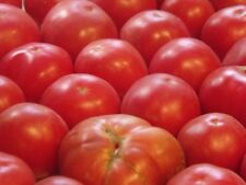 Tomato GERMAN JOHNSON 25 Heirloom, Non-gmo Seed - FREE SHIPPING