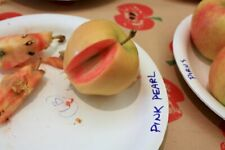 SOLD OUT  RARE Pink pearl Apple Tree pre order