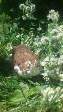 25+ Scarlet/Range Corurnix Hatching Eggs By Myshire Farm! Includes Tuxedo Also!