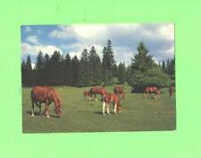 R POSTCARD NICE HORSES AU PATURAGE DE JURA FRANCHES MONTAGNES