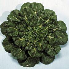 Suffolk Hierbas-Orgánico oriental Tatsoi Roseta Pak Choi - 150 semillas