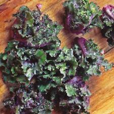 KALETTES - BRUKALE - Brussel Sprouts Crossed Kale - 10 Vegetable Seeds-Rare
