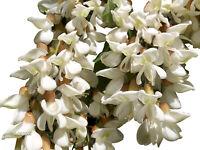 Robinie -Robinia pseudoacacia- Mengenauswahl 20 - 1.000 Samen  *Winterhart*
