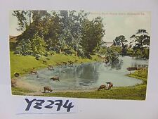 VINTAGE POSTED POSTCARD STAMP 1910 SHREVEPORT LA. WATERING STOCK SHREVE ISLAND