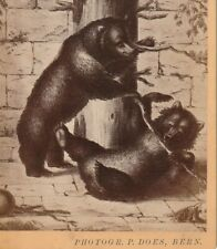 P DOES OURS d' après gravure BERN BERNE SUISSE 1890 PHOTO CABINET 15 X 10 cm CDV